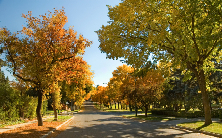fall_drive_xsm
