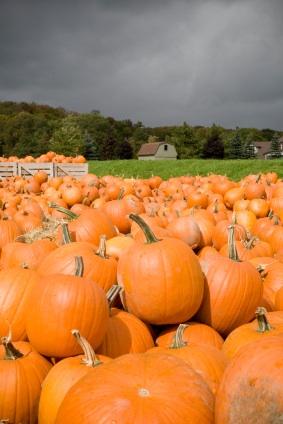 pumpkins_7387280_xsm