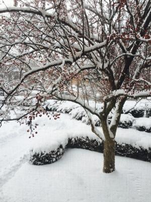 snow 5_sm