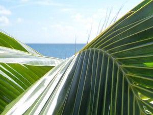Palm_fronds